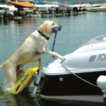 """Pawz Pet Products Doggy Boat Ladder 64"""" x 16"""" - PP-Z5200"""